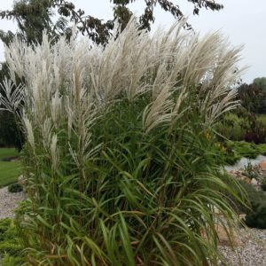 trawy ozdobne do ogrodu Włocławek