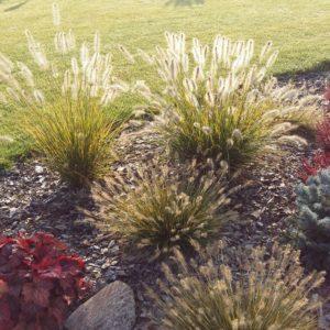 Włocławek trawy ozdobne do ogrodu