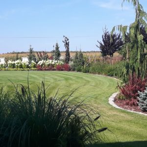 trawy ozdobne w ogrodzie Włocławek