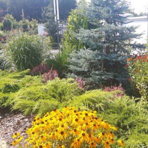 Włocławek trawy ozdobne w ogrodzie