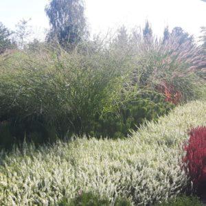 ozdobna trawa w ogrodzie