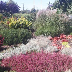 trawa ozdobna ogrodowa